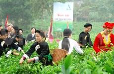 Vietnam's tea products in spotlight at seminar