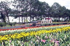 Myriad activities to be held during Da Lat tourism week