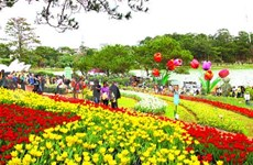 City of Flowers offers financial support to horticulturalists