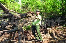 In Quang Nam, rangers determined to protect forest