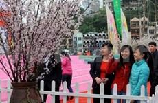Quang Ninh to host annual cherry blossom festival