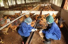 Can Tho city braced for avian influenza