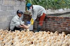 Cao Bang, Quang Ngai prepare themselves against bird flu