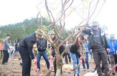 Apricot trees planted at General Giap's grave