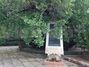 Ben Tre has new heritage tree