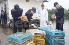 Ministry takes action against bird flu threat