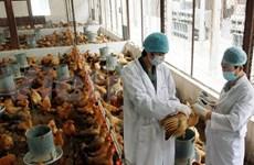 PM urges action against avian flu