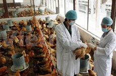 Localities continue efforts against bird flu