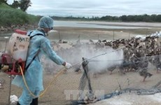 Border localities urged to contain bird flu spread