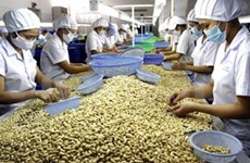 Cashew exports to reach 1.8 billion USD in 2014