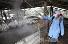 Hai Duong declares H5N1 flu outbreak