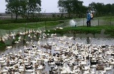 Localities work to prevent bird flu outbreak