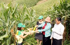 Farmers to learn benefits of genetically modified crops