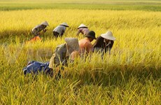 FAO warns food shortages in Asia-Pacific