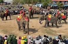 Elephants enter race in Dak Lak province