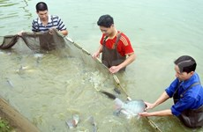 Deputy PM urges seafood policy review