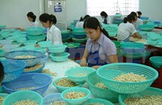 Global supply rise to hit Vietnam cashew exports