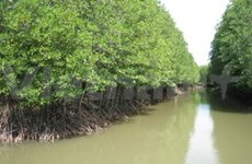 Mangrove forest protects residents