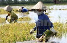 IFAD funds Ben Tre climate change adaptation project