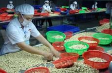 Processors seek to develop cashew nut industry
