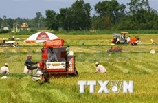 Vietnam, Netherlands join hands for Mekong Delta's development