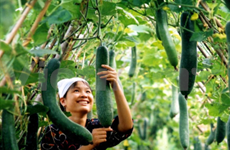 Basic GAP – feasible solution for safe crop production
