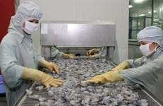 Mekong Delta targets 2.6 bln USD in shrimp exports