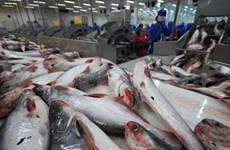 Tra fish exporters seek stronger foothold in European market