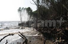 Kien Giang: damaged dykes pose great danger