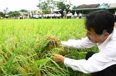 Vietnam's first hybrid rice R&D station opens
