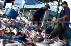 Tra fish distribution centre to be set up at Belgian harbour