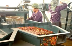 Laos draws Vietnamese workers