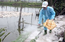 Lao Cai detects H5N6 virus in domestic fowls