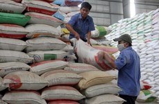 772 tonnes of rice to be provided for Ninh Thuan drought victims