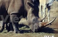 Media urged to work more to stop rhino killing
