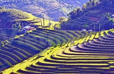 Culture – Tourism Week to celebrate beauty of rice terraces