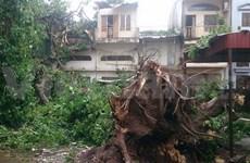 Typhoon Kalmaegi leaves 11 dead