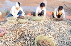Vietnam halts export of bivalve molluscs to EU