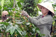 Vietnam's trade with Chile soars 102 percent