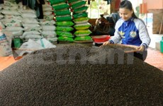 India tops list of Vietnam's pepper importers in South Asia