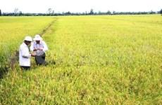 Mekong focuses on sustainable rice development