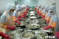Ca Mau strives towards sustainable shrimp production