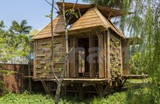 Bamboo house logs global triumph