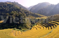 Son La exerts more efforts to protect biodiversity