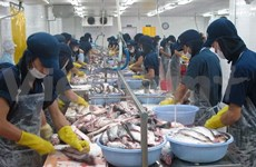 Tra fish exports bounce back