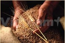 Australia sees grain opportunities in Vietnam