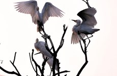 Hai Duong's Stork Island becomes national relic site