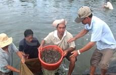 First Vietnamese shrimp farm meets sustainability standards
