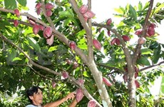 Cocoa sector in search of fresh way forward