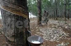 Malaysia, Thailand, Indonesia form regional rubber market